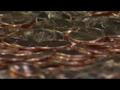 News video: Petition To Mint Trillion Dollar Coin Gets Legs, As A Joke At Least